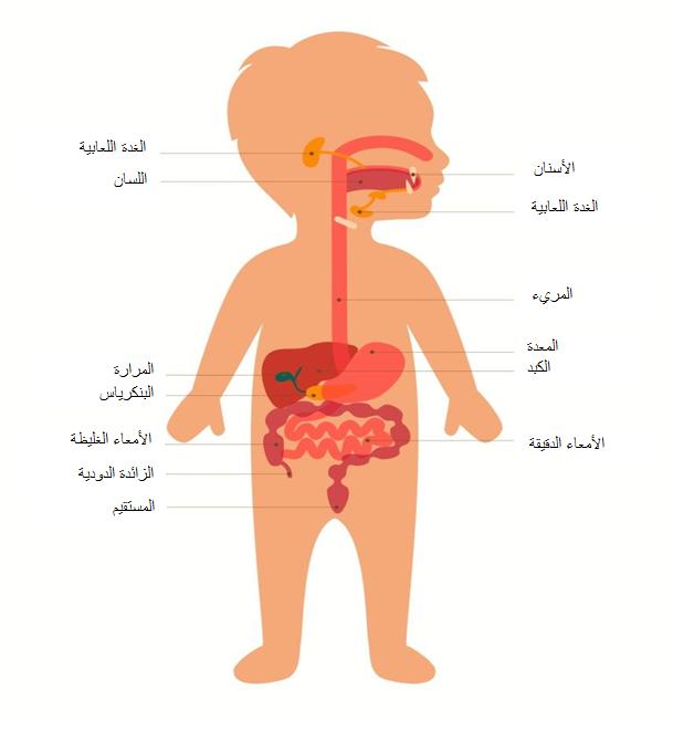 صورة الجهاز الهضميe